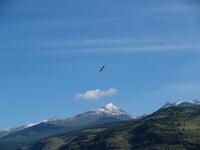 Над долиной Чулышмана орел хищный гордо реет!