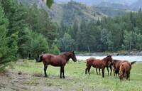 Напоследок, снова лошади